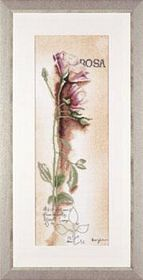 Rosa - Botanical -  Cross Stitch Kit