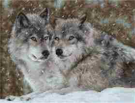 Two Wolves -  Cross Stitch Kit