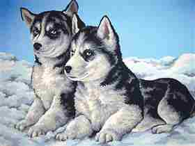 Husky Puppies -  Tapestry Canvas