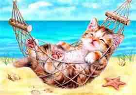 Kitten on Holiday -  Tapestry Canvas