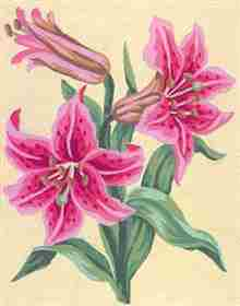 Tigerlily -  Tapestry Canvas