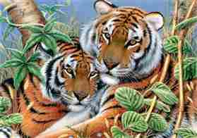 Tender Tigers -  Tapestry Canvas