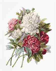 The Peonies -  Cross Stitch Kit
