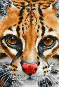 Leopardus Pardalis -  Cross Stitch Kit