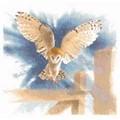Heritage Owl in Flight - Aida Cross Stitch Kit