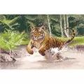 Heritage Tiger - Evenweave Cross Stitch Kit