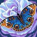 Grafitec Midnight Blue Tapestry Canvas