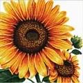 Needleart World Sunflower No Count Cross Stitch Kit