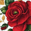 Needleart World Rose No Count Cross Stitch Kit
