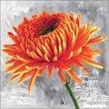 Needleart World Orange Dahlia Floral No Count Cross Stitch Kit