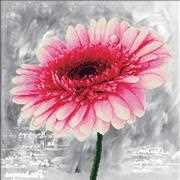 Needleart World Pink Dahlia Floral No Count Cross Stitch Kit