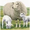 Lanarte Sheep - Evenweave Cross Stitch Kit