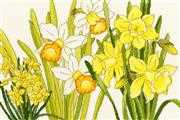 Bothy Threads Daffodil Blooms Floral Cross Stitch Kit
