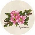 Panna Small Bunch of Wild Rose Cross Stitch Kit