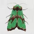 Panna Green Moth Embroidery Kit