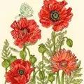Bothy Threads Poppy Garden Cross Stitch Kit