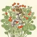 Bothy Threads Nasturtium Garden Floral Cross Stitch Kit