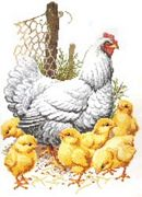 Pako Chicken Family Cross Stitch Kit