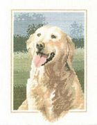 Golden Retriever - Aida - Heritage Cross Stitch Kit