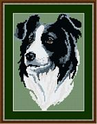 Border Collie - Brigantia Tapestry Kit