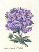 Eva Rosenstand Rhododendron Impeditum Cross Stitch Kit