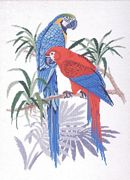 Parrot Pair - Eva Rosenstand Cross Stitch Kit