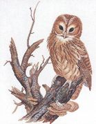 Tawny Owl - Aida - Eva Rosenstand Cross Stitch Kit
