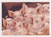 Eva Rosenstand Piggy Pile Cross Stitch Kit