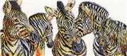 Wild Things Zebras - Design Works Crafts Cross Stitch Kit