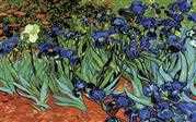 Irises - Grafitec Tapestry Canvas