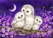 Owl Family - Grafitec Tapestry Canvas