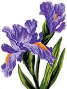 Grafitec Irises Tapestry Canvas