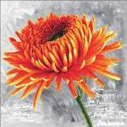 Orange Dahlia - Needleart World No Count Cross Stitch Kit