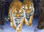 Needleart World Stalking Tigers Christmas No Count Cross Stitch Kit