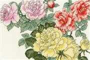 Bothy Threads Rose BLooms Cross Stitch Kit