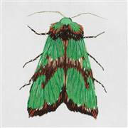 Panna Green Moth Embroidery Kit