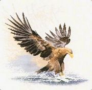 Eagle in Flight - Evenweave - Heritage Cross Stitch Kit