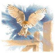 Heritage Owl in Flight - Evenweave Cross Stitch Kit