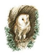 Barn Owl - Evenweave - Heritage Cross Stitch Kit