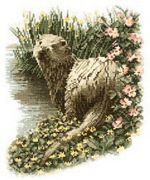 Heritage Otter - Evenweave Cross Stitch Kit